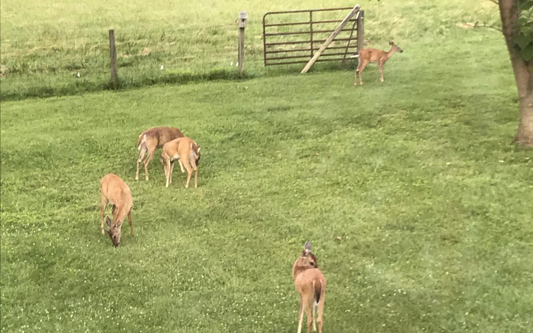 Oh, deer me!