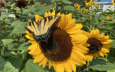 Blessed are the pollinators